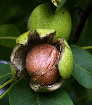 Калорийность варенья из зеленых грецких орехов — pic 8